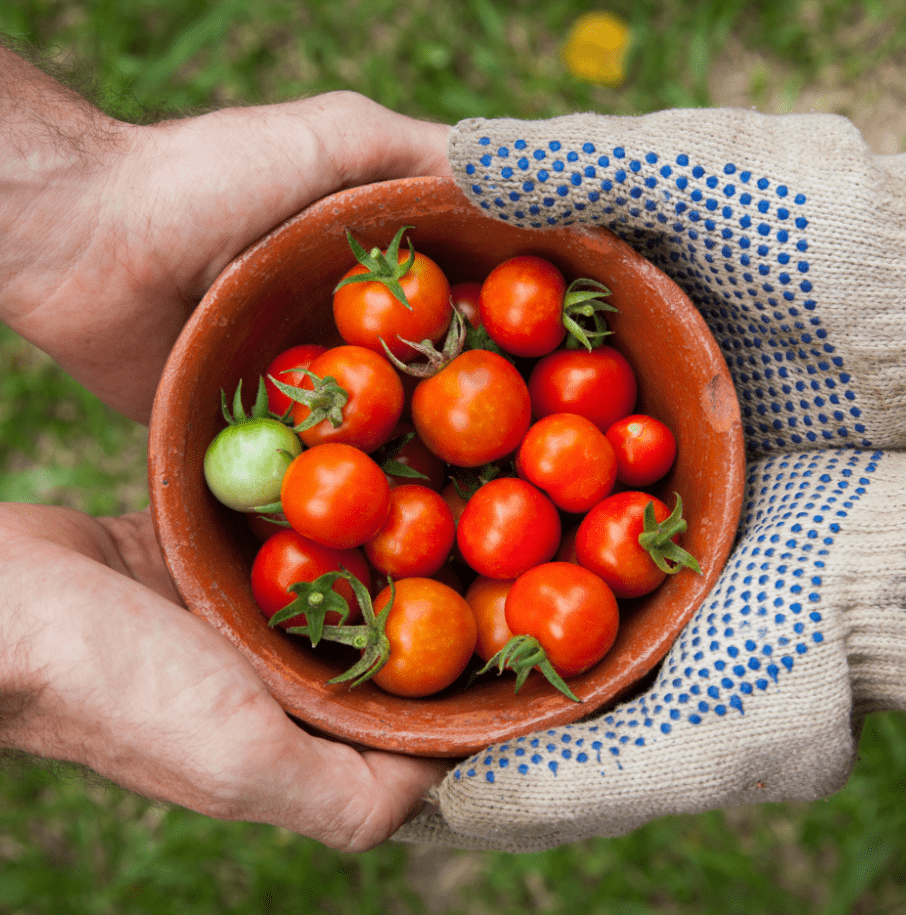 Ecocesta - Tomates